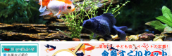金魚の養殖販売『アクアランド徳永』ホームページ制作