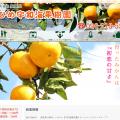 愛媛県の美味しいみかん【えひめ宇和海果樹園】ホームページ制作